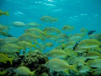 Learn with snorkeling in Maya Reef