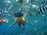 El mundo acuático en Cancún