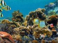 Peces en Arrecife Maya