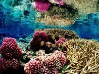 Corales en Arrecife Maya