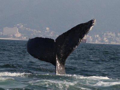 Vallarta Explore Whale Watching