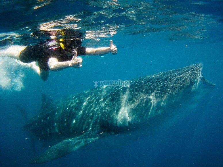 Posando con el tiburon ballena