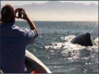 Ballenas en Puero Vallarta