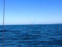 La ballena yendose