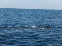 Nada con la ballena