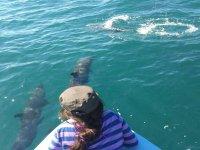 Admira a los delfines