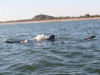 Mira a todas las ballenas