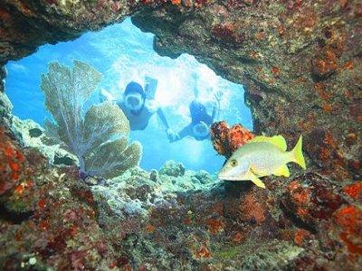 Phantom Divers Snorkel