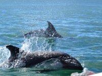 Ballenas jorobadas