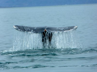 Fintastic Fishing Whale Watching