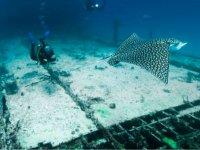Buque militar convertido en arrecife artificial