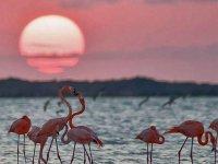 Flamingos rosas en Río Lagartos