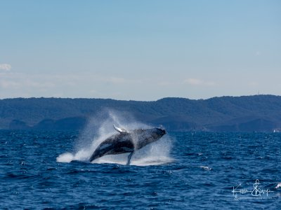 Oceano Adventures Whale Watching