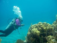 Bucear en arrecifes