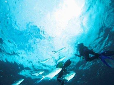 Sealife Divers
