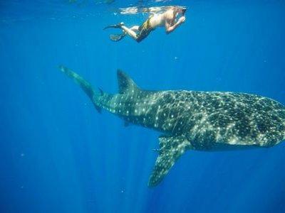 Dive Shop México Snorkel