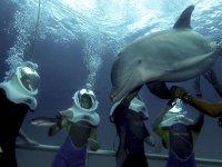 Dolphin Trek