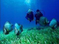 Diving in xel ha