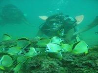 Swimming among fish
