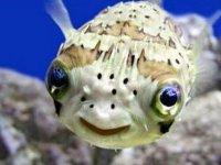 Fish of xel ha