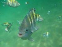 fish of xelha