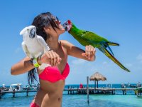 With parrots