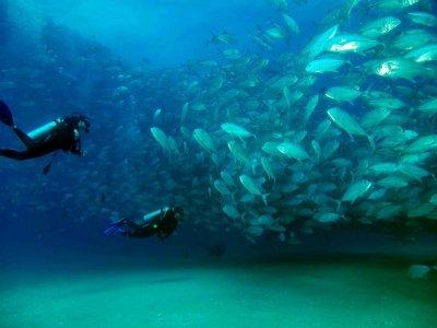 Mar y Sierra Cabo Pulmo Buceo