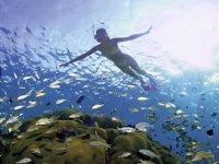 Contempla el paisaje submarino