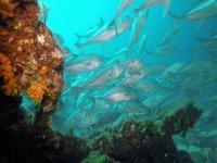 El fondo y los peces