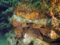 Las anguilas escondidas