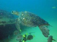 Las tortugas del fondo marino