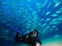 Maravilla poder nadar con los peces
