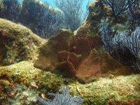 Mira los corales