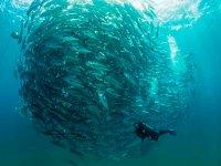 Navega con los peces