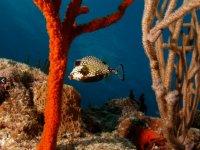 Especies del fondo del mar