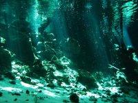 Interior de un cenote