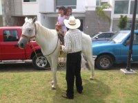 caballos a tu fiesta