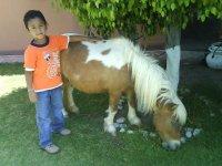 pony en tu fiesta