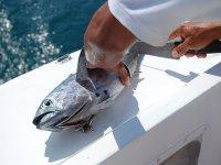 Limpiando pescado