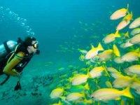 Buceo con bancos de peces