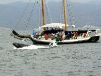 Tours de whale watching