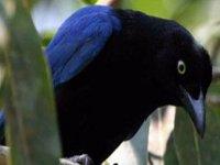 Aves de Vallarta