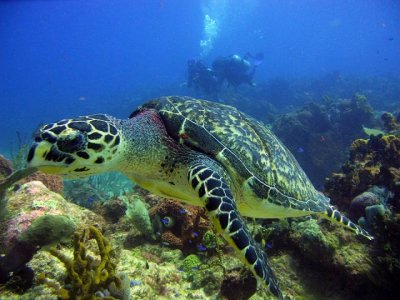 Diving Center Cancun