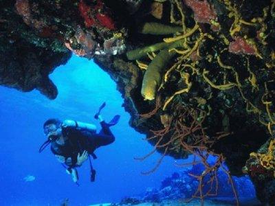 Tank Ha Dive Center Buceo