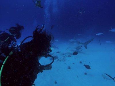 Diversion Dives Cancún Buceo