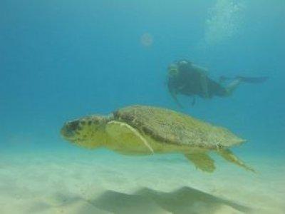 Reef Quest Divers México Buceo