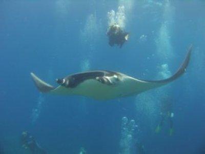 Reef Quest Divers México