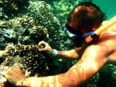 Acción Tropical Snorkel