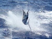 Pescar en Vallarta
