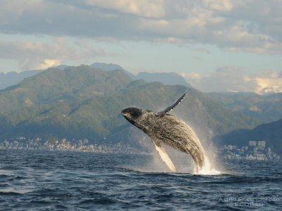 Mike's Fishing Charters Whale Watching